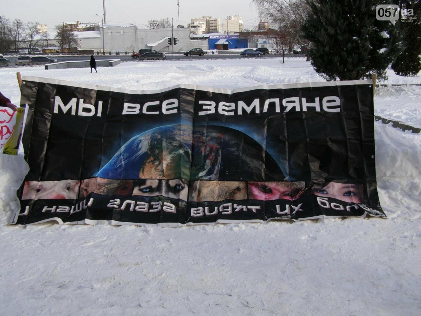 """""""За цирк без животных"""": харьковские зоозащитники устроили пикет (ФОТО), фото-7"""