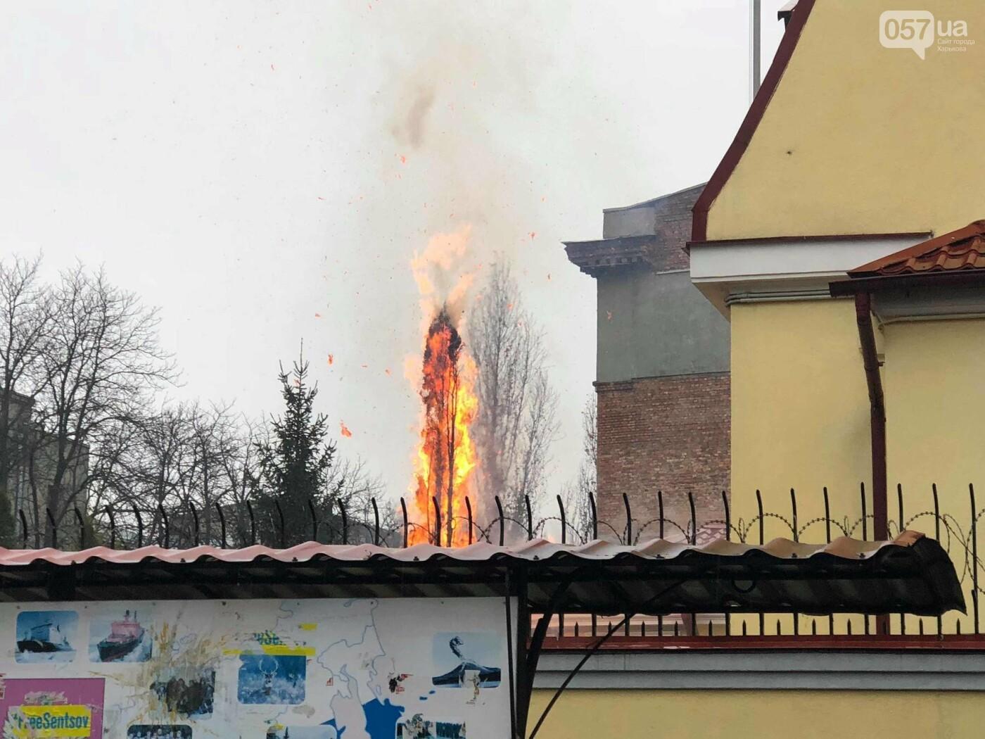 Полыхающая елка и сгоревший флаг РФ: пикет под консульством России в Харькове, - ВИДЕО, фото-2