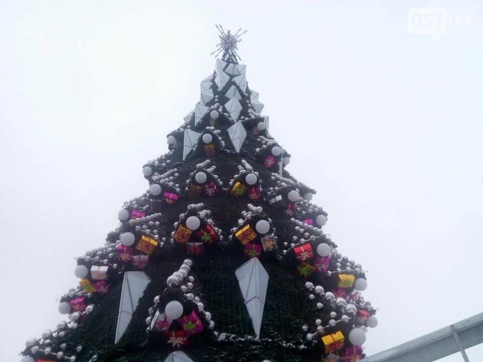 На площади Свободы установили новогоднюю елку, - ФОТО, фото-1