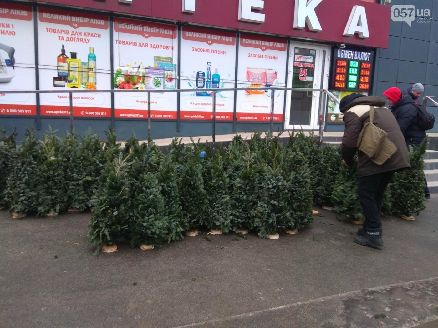 Новогодние елки в Харькове. Где и за сколько можно купить, - ФОТО, фото-5