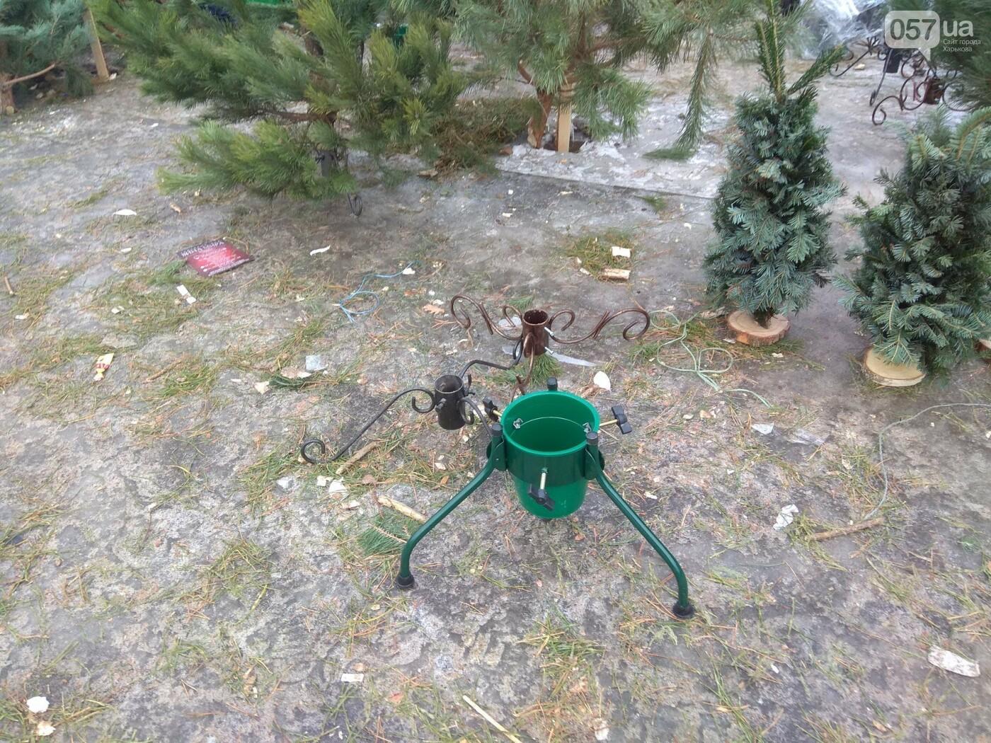 Новогодние елки в Харькове. Где и за сколько можно купить, - ФОТО, фото-8