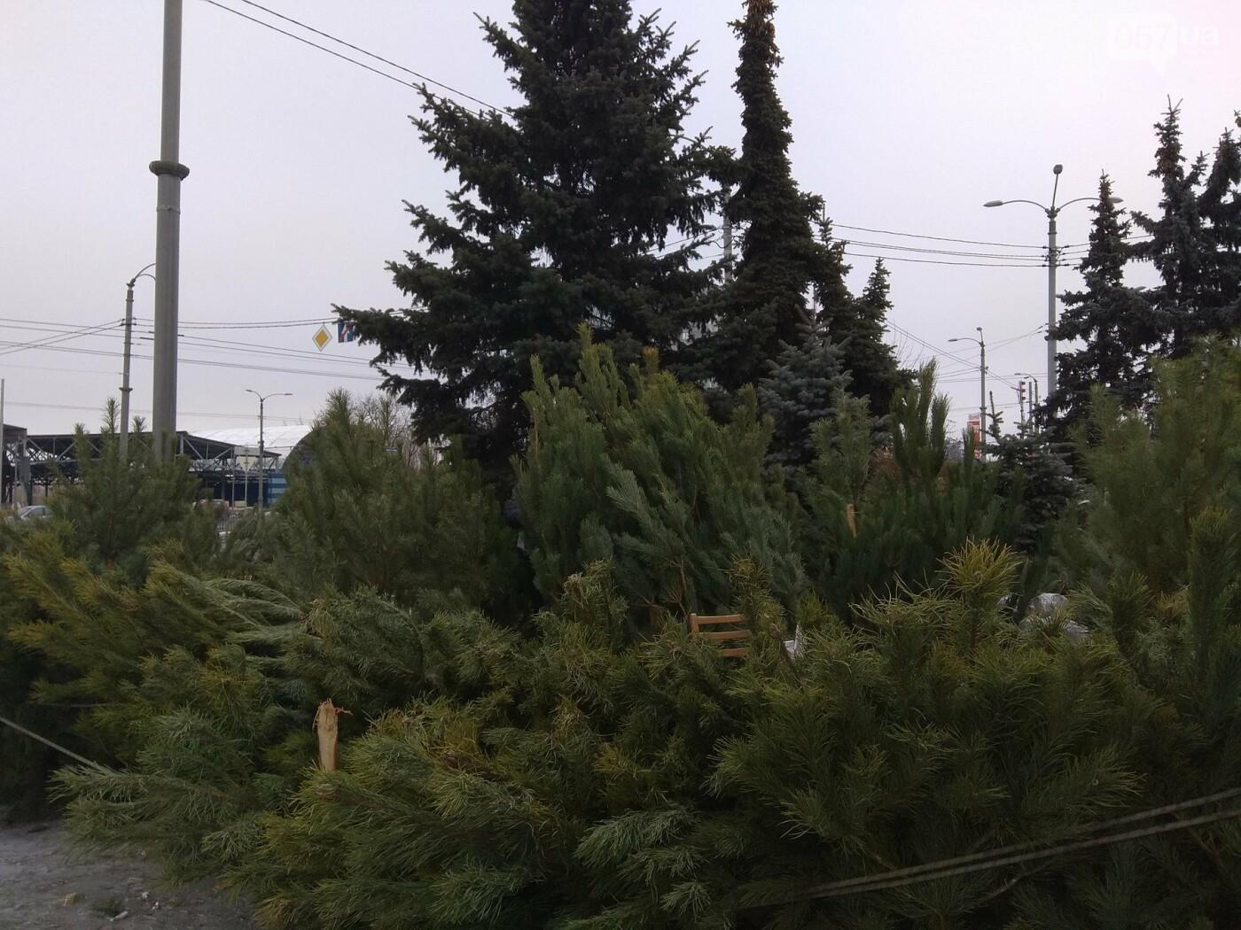 Новогодние елки в Харькове. Где и за сколько можно купить, - ФОТО, фото-6