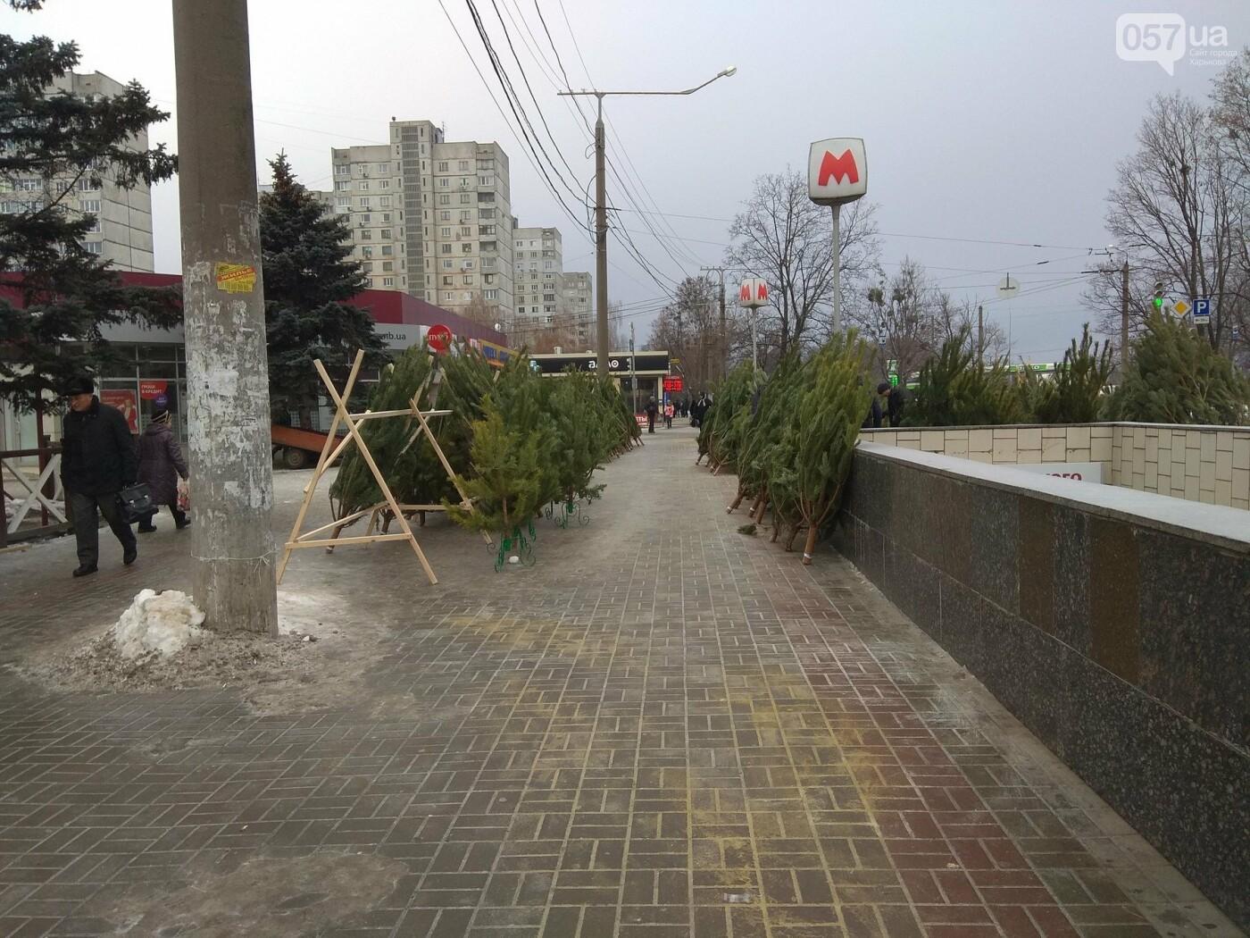 Новогодние елки в Харькове. Где и за сколько можно купить, - ФОТО, фото-9