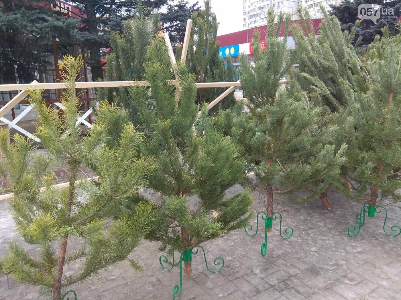 Новогодние елки в Харькове. Где и за сколько можно купить, - ФОТО, фото-11