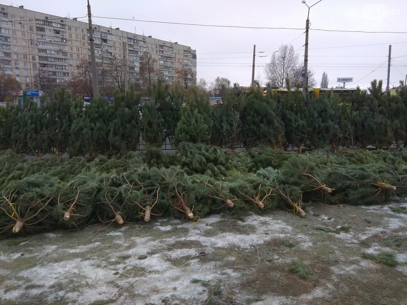 Новогодние елки в Харькове. Где и за сколько можно купить, - ФОТО, фото-12