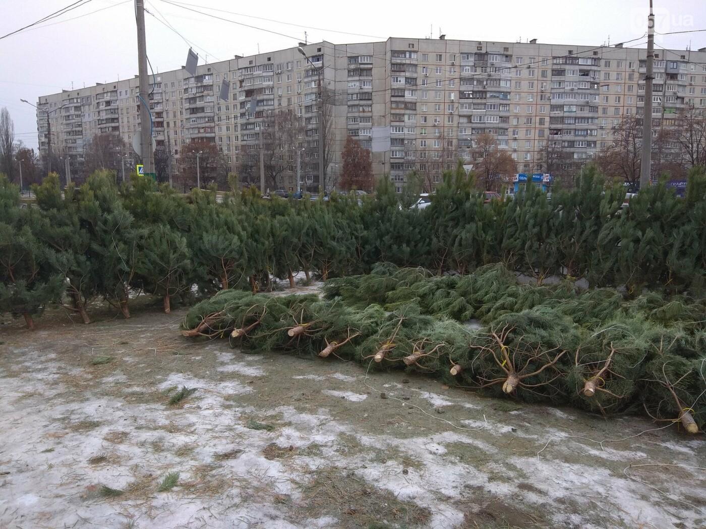 Новогодние елки в Харькове. Где и за сколько можно купить, - ФОТО, фото-13