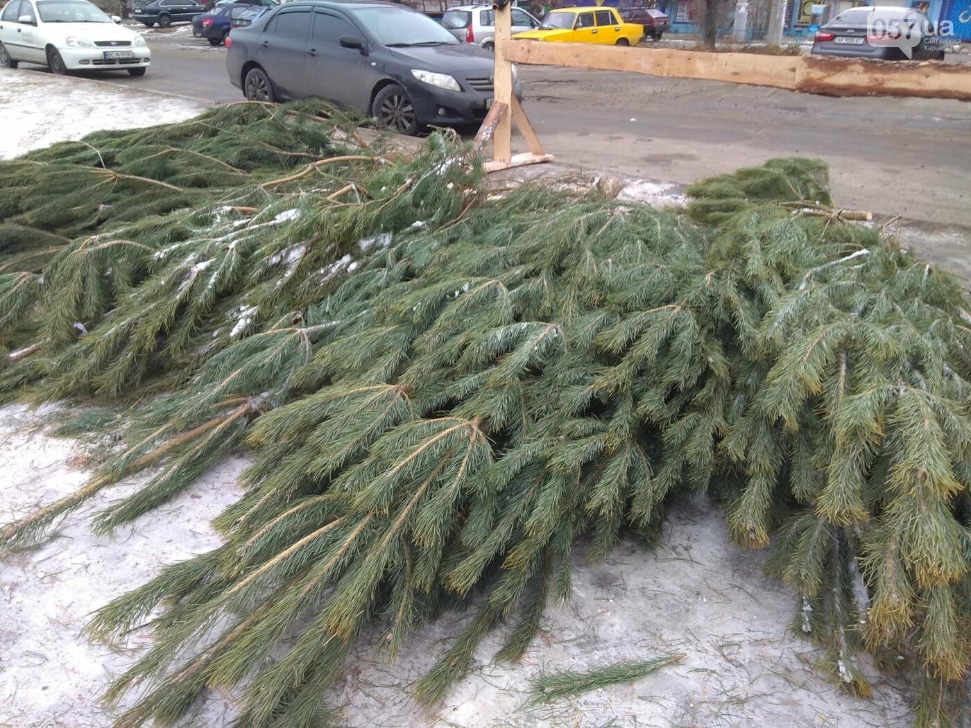 Новогодние елки в Харькове. Где и за сколько можно купить, - ФОТО, фото-16