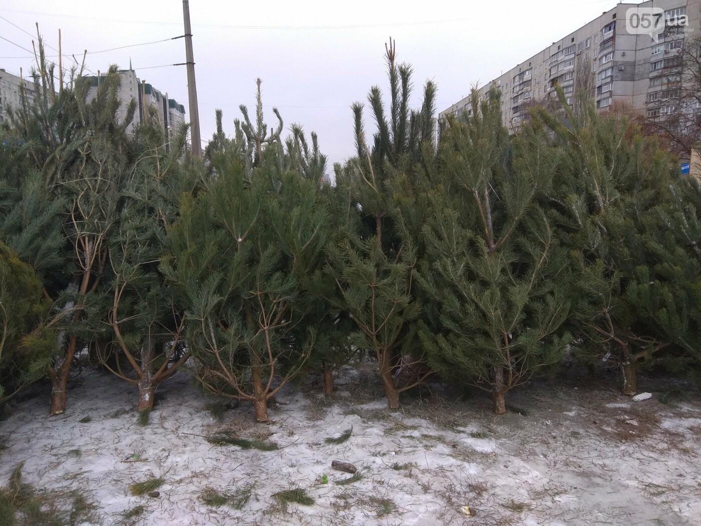 Новогодние елки в Харькове. Где и за сколько можно купить, - ФОТО, фото-17