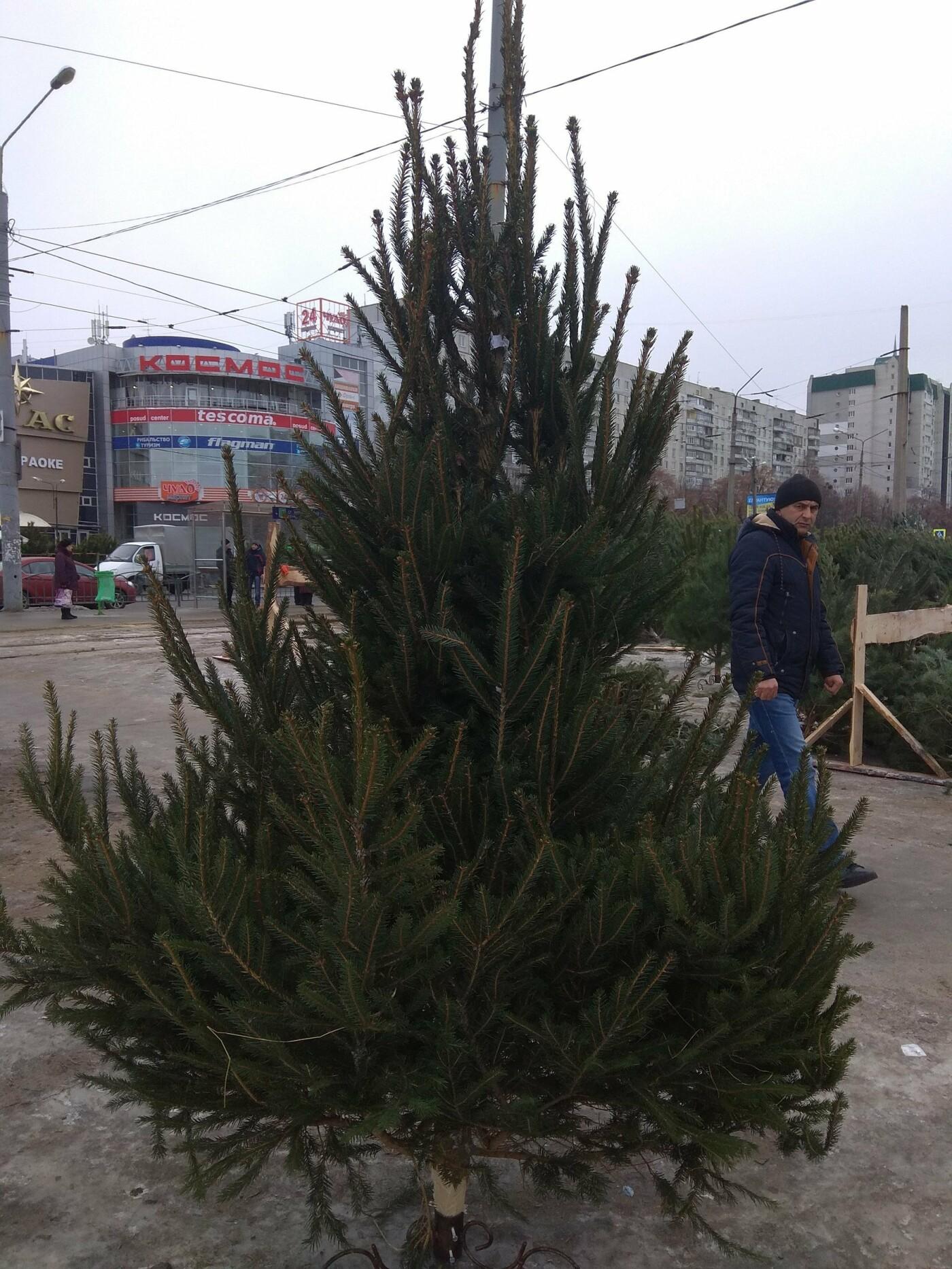 Новогодние елки в Харькове. Где и за сколько можно купить, - ФОТО, фото-18