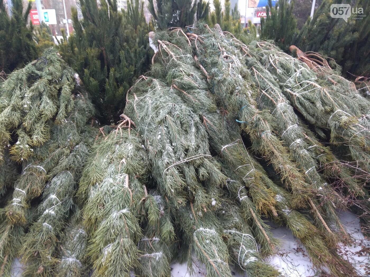 Новогодние елки в Харькове. Где и за сколько можно купить, - ФОТО, фото-19