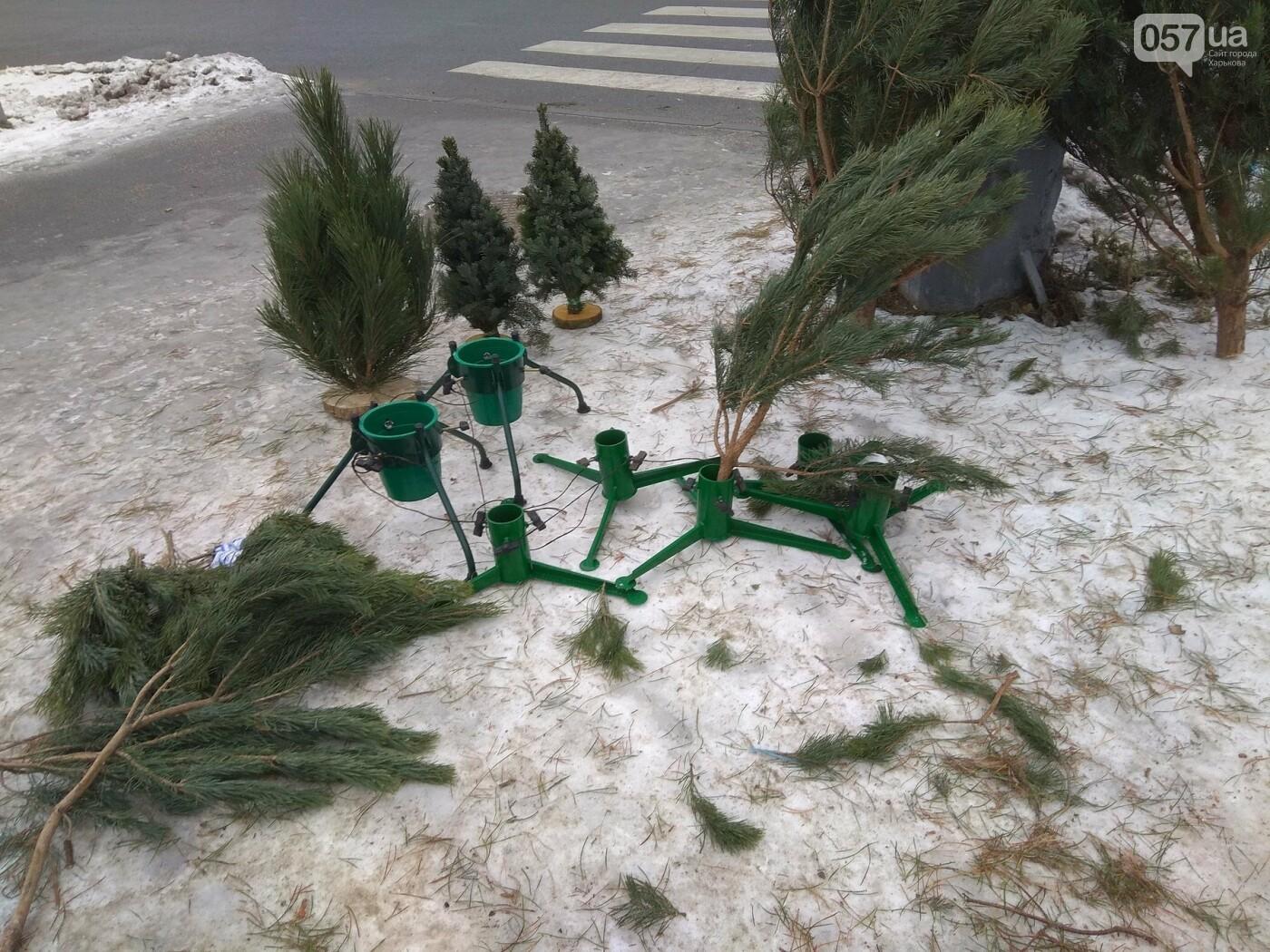 Новогодние елки в Харькове. Где и за сколько можно купить, - ФОТО, фото-21