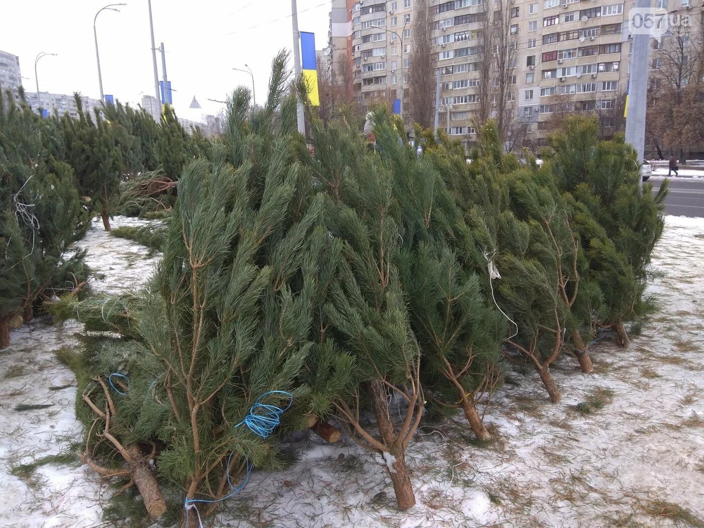 Новогодние елки в Харькове. Где и за сколько можно купить, - ФОТО, фото-22