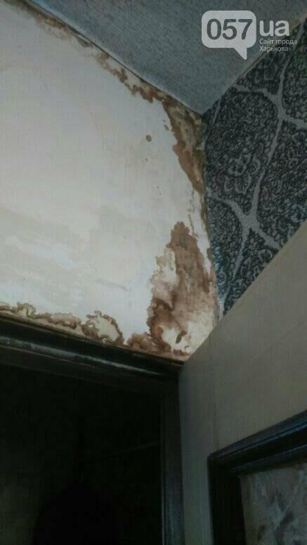 Отваливающиеся обои и плесень на стенах: на ХТЗ жители дома страдают из-за протекающей крыши, - ФОТО, фото-8