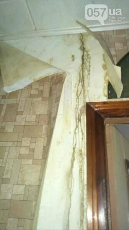 Отваливающиеся обои и плесень на стенах: на ХТЗ жители дома страдают из-за протекающей крыши, - ФОТО, фото-9