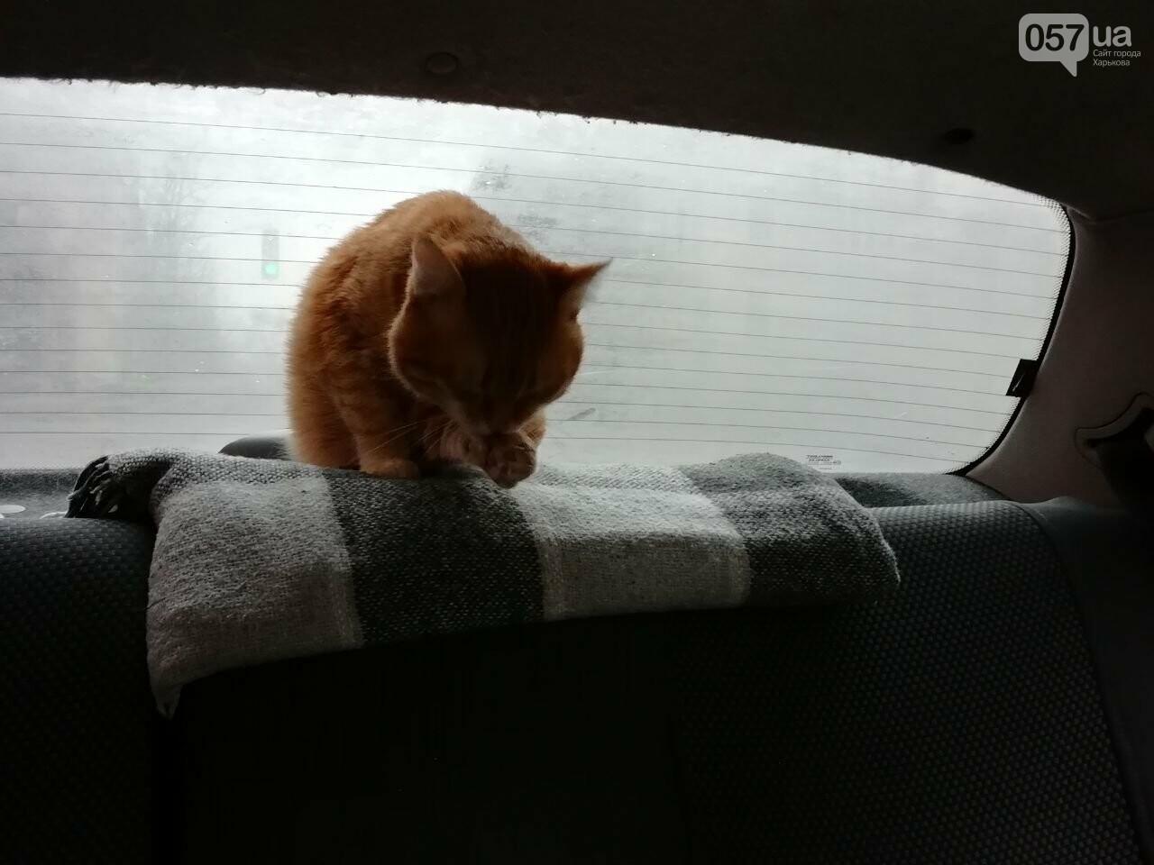 Поездка с котом и большие чаевые. Как харьковский таксист с питомцем возит пассажиров, - ФОТО, фото-18