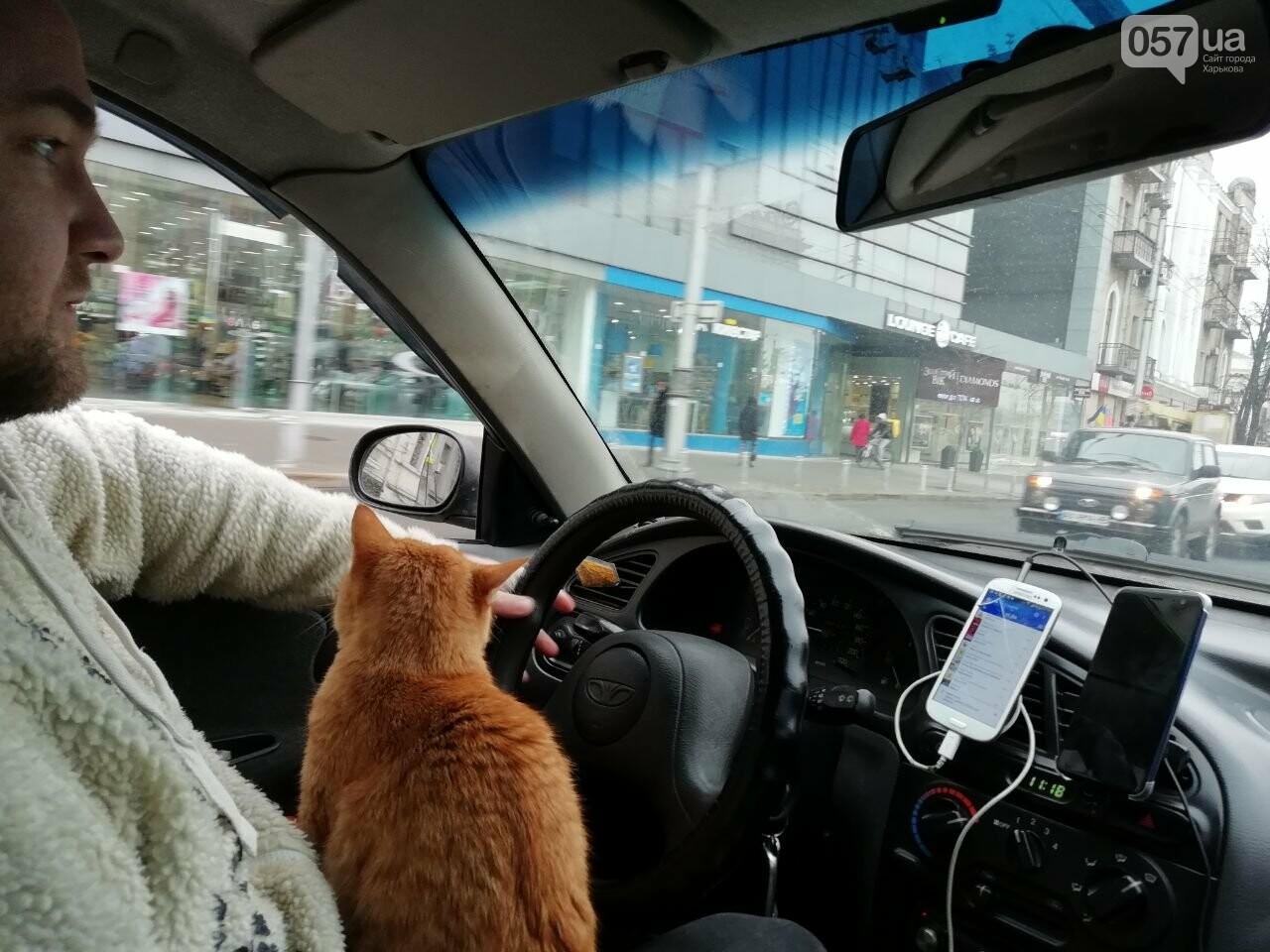 кот такси картинки дверь универсальная
