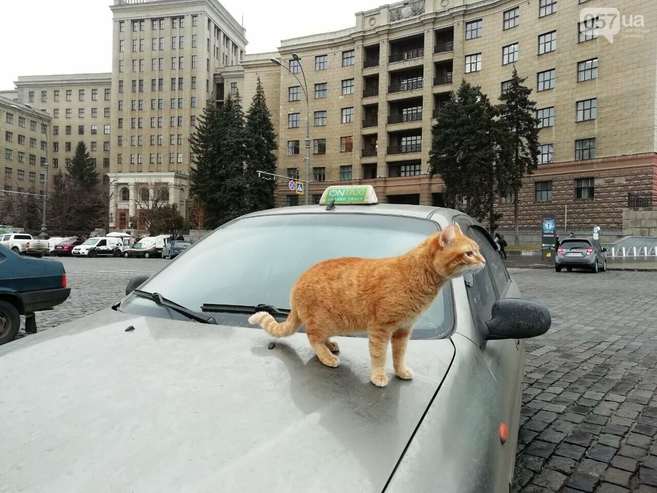 Поездка с котом и большие чаевые. Как харьковский таксист с питомцем возит пассажиров, - ФОТО, фото-4