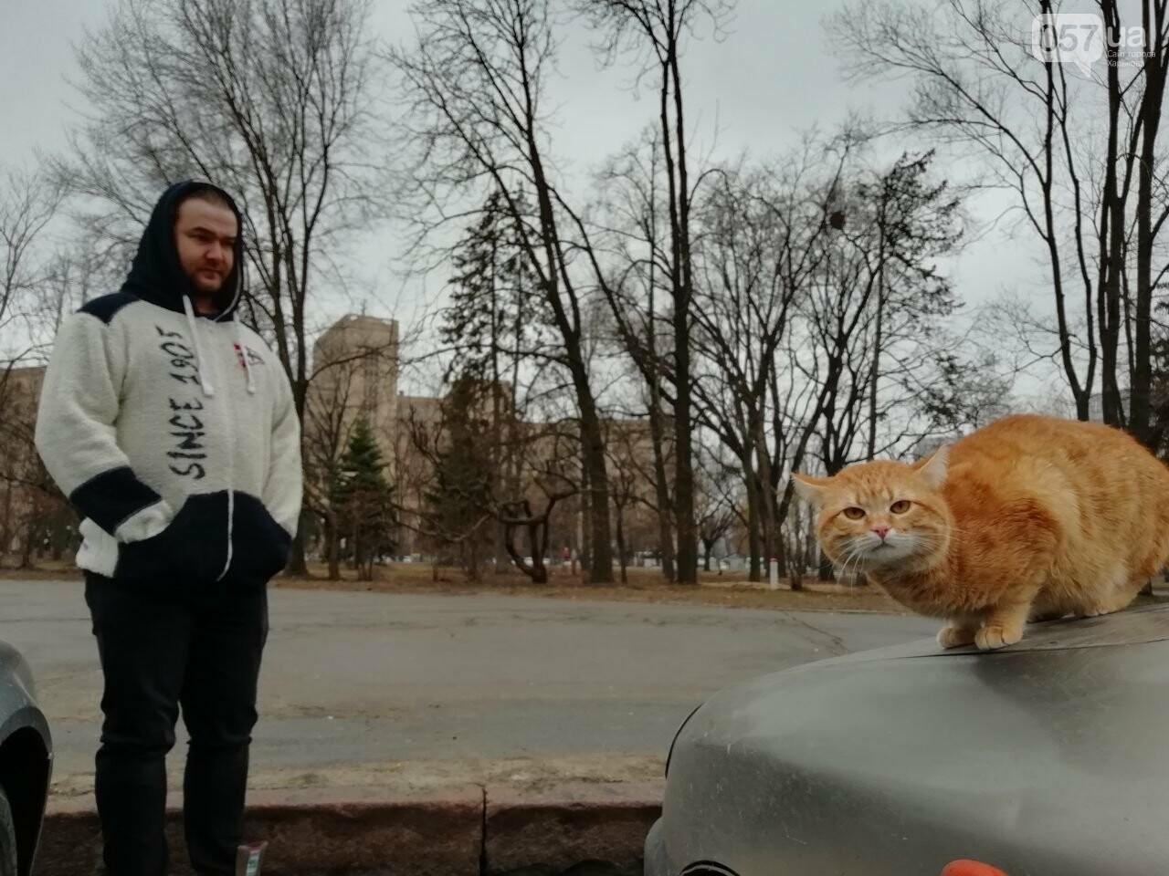 Поездка с котом и большие чаевые. Как харьковский таксист с питомцем возит пассажиров, - ФОТО, фото-5