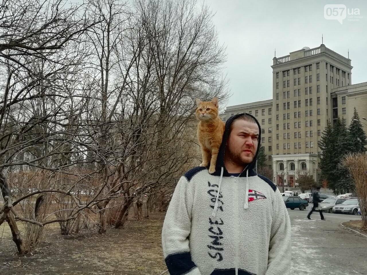Поездка с котом и большие чаевые. Как харьковский таксист с питомцем возит пассажиров, - ФОТО, фото-7