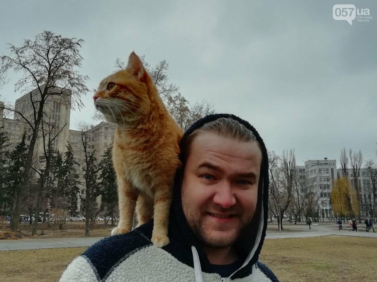 Поездка с котом и большие чаевые. Как харьковский таксист с питомцем возит пассажиров, - ФОТО, фото-9