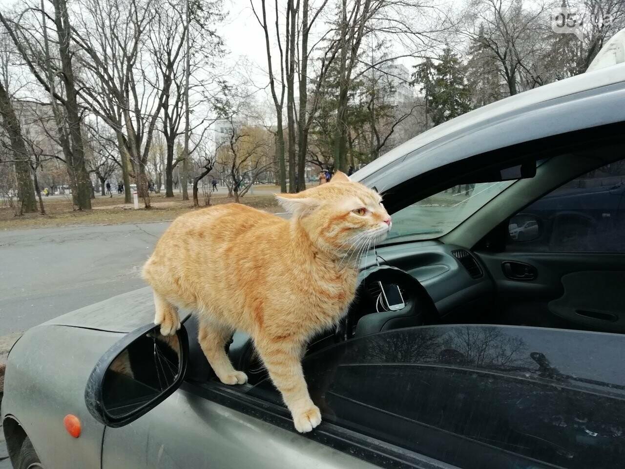 Поездка с котом и большие чаевые. Как харьковский таксист с питомцем возит пассажиров, - ФОТО, фото-10