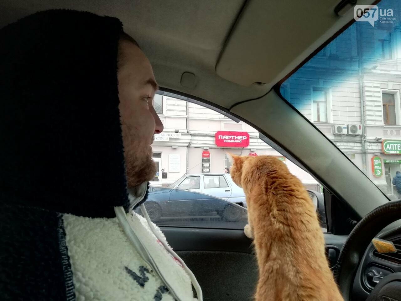 Поездка с котом и большие чаевые. Как харьковский таксист с питомцем возит пассажиров, - ФОТО, фото-16