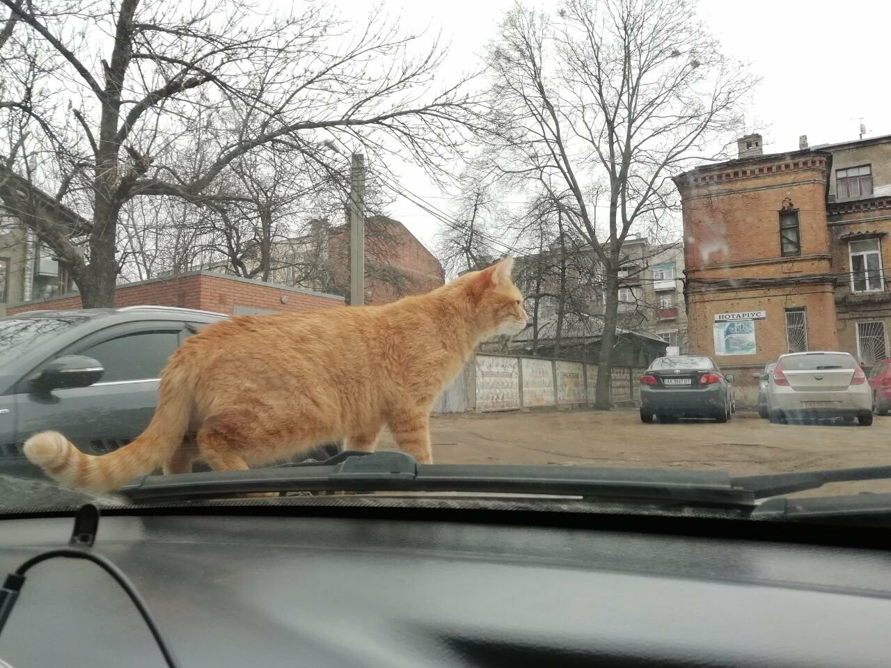 Поездка с котом и большие чаевые. Как харьковский таксист с питомцем возит пассажиров, - ФОТО, фото-11