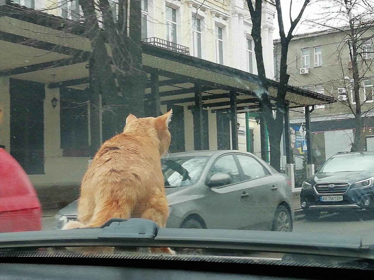 Поездка с котом и большие чаевые. Как харьковский таксист с питомцем возит пассажиров, - ФОТО, фото-12