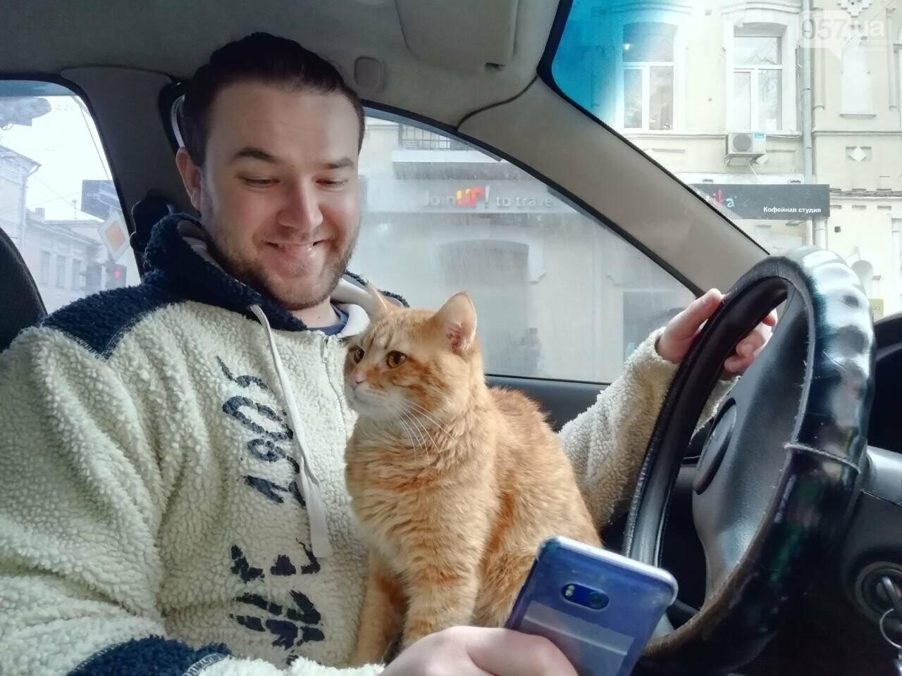 Поездка с котом и большие чаевые. Как харьковский таксист с питомцем возит пассажиров, - ФОТО, фото-26