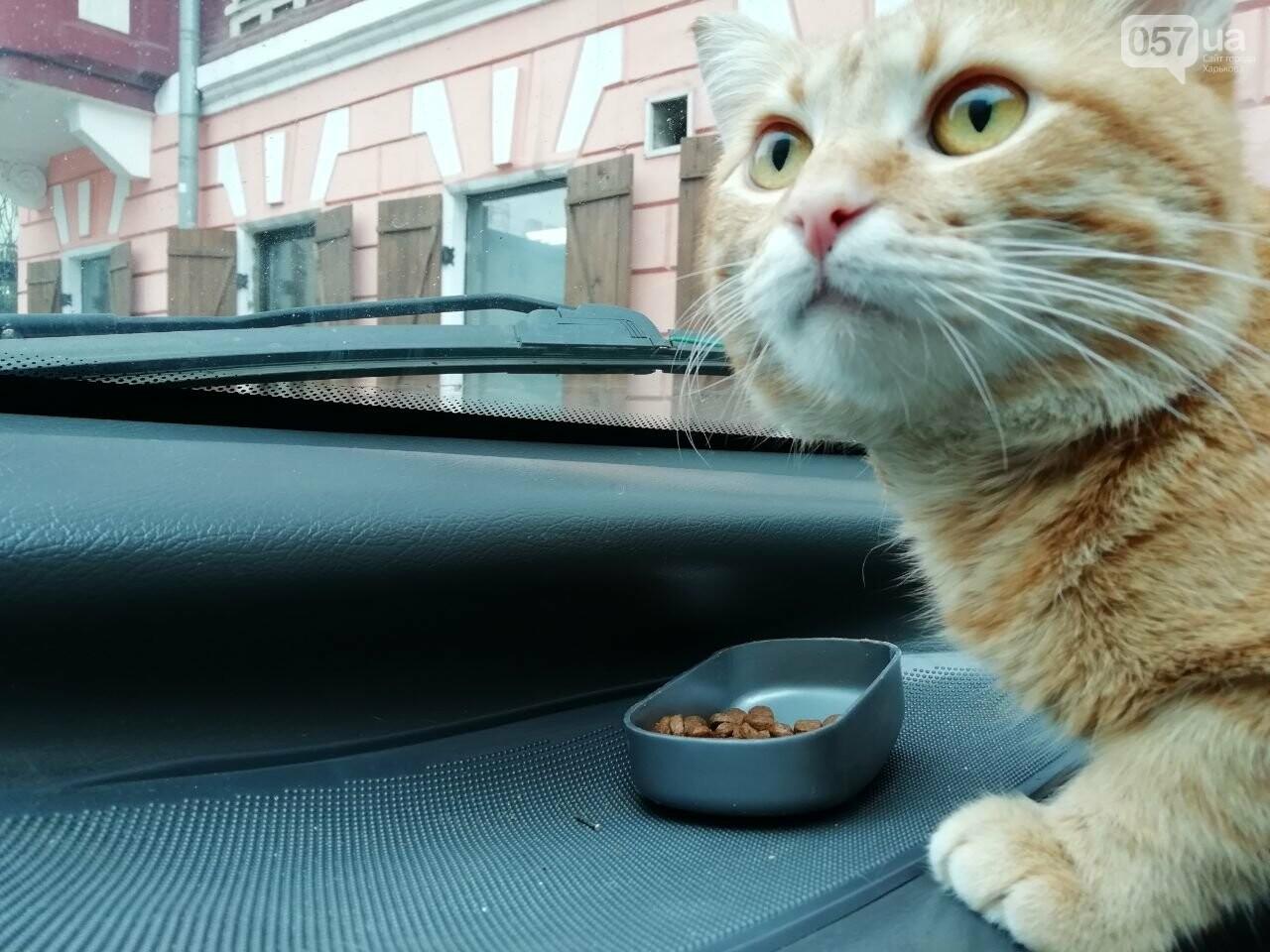 Поездка с котом и большие чаевые. Как харьковский таксист с питомцем возит пассажиров, - ФОТО, фото-23
