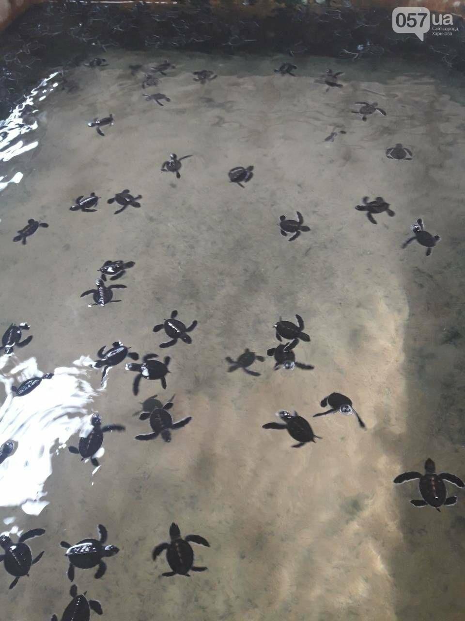Из Харькова на Цейлон. Шахты с лунным камнем, купание слонов и спасение черепах от хищников, - ФОТО, фото-12