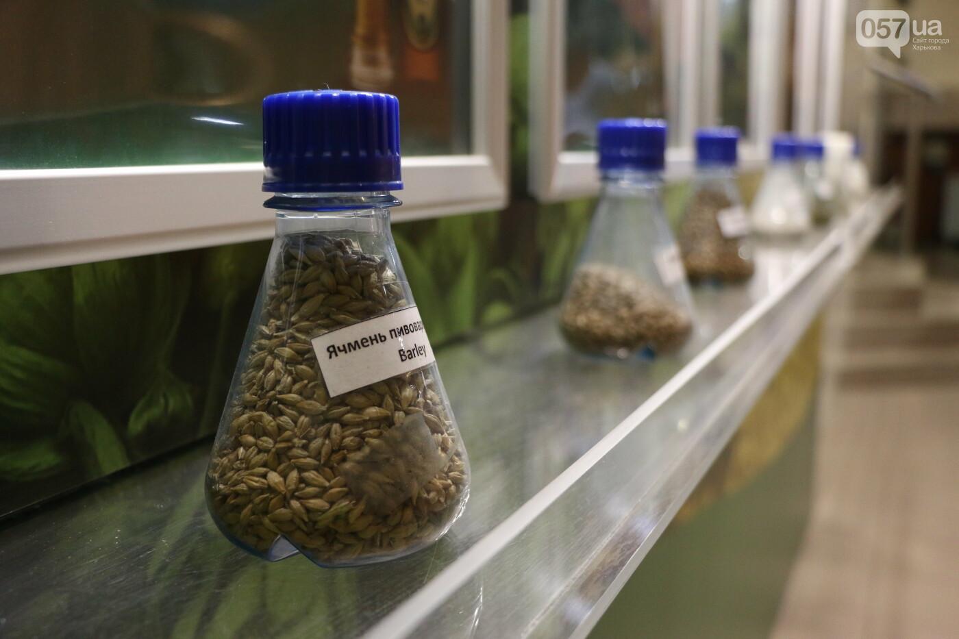 От выращивания ячменя до розлива в бутылки: как в Харькове варят пиво и что в него добавляют, - ФОТО, фото-4