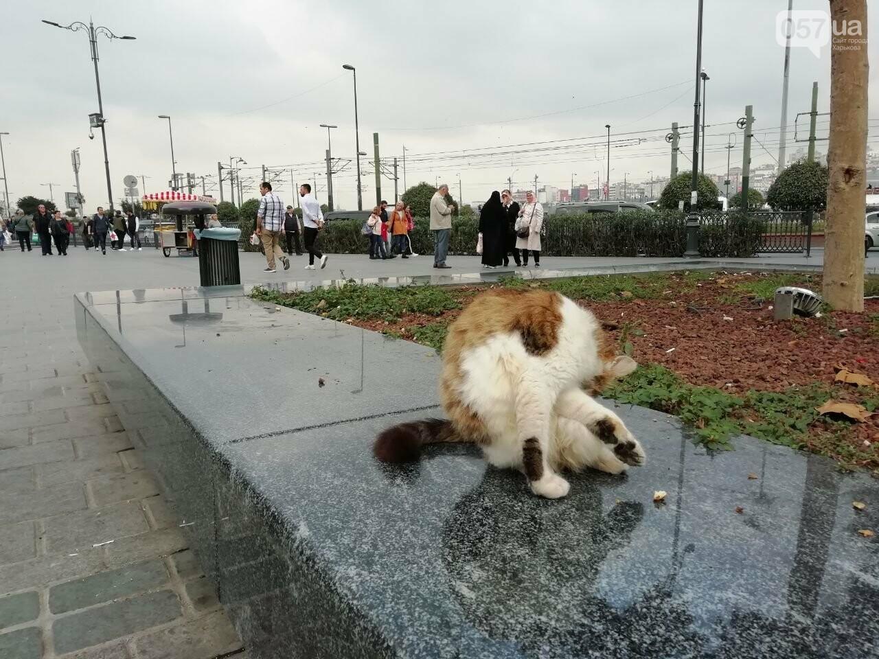 Из Харькова в Стамбул. Как добраться, что попробовать и на что посмотреть в турецком городе, - ФОТО, фото-44