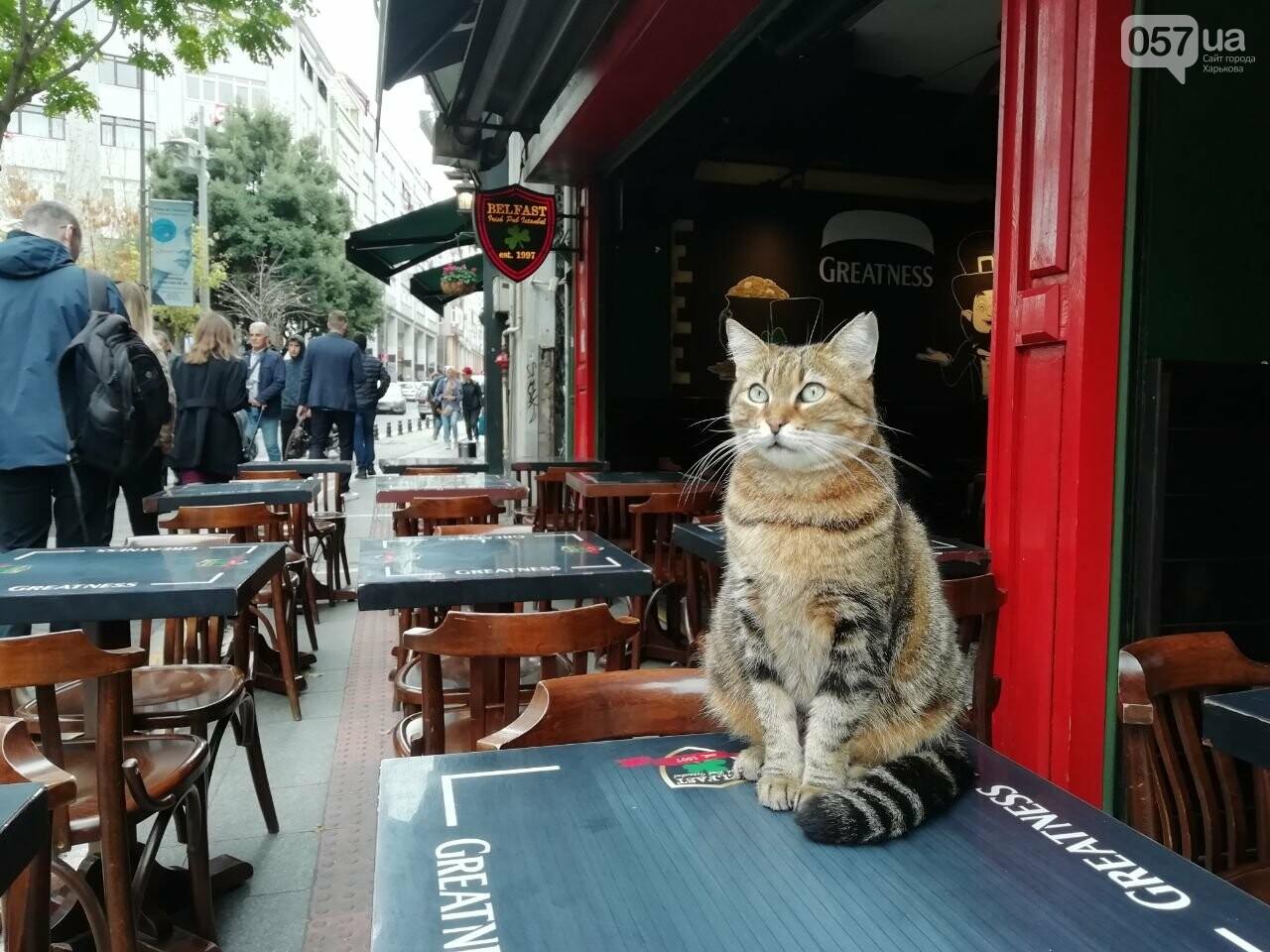 Из Харькова в Стамбул. Как добраться, что попробовать и на что посмотреть в турецком городе, - ФОТО, фото-43