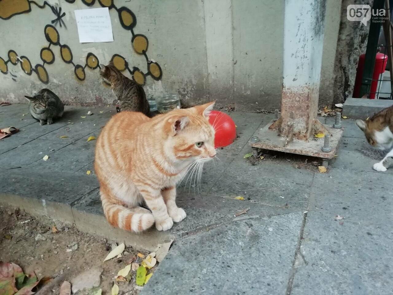 Из Харькова в Стамбул. Как добраться, что попробовать и на что посмотреть в турецком городе, - ФОТО, фото-46