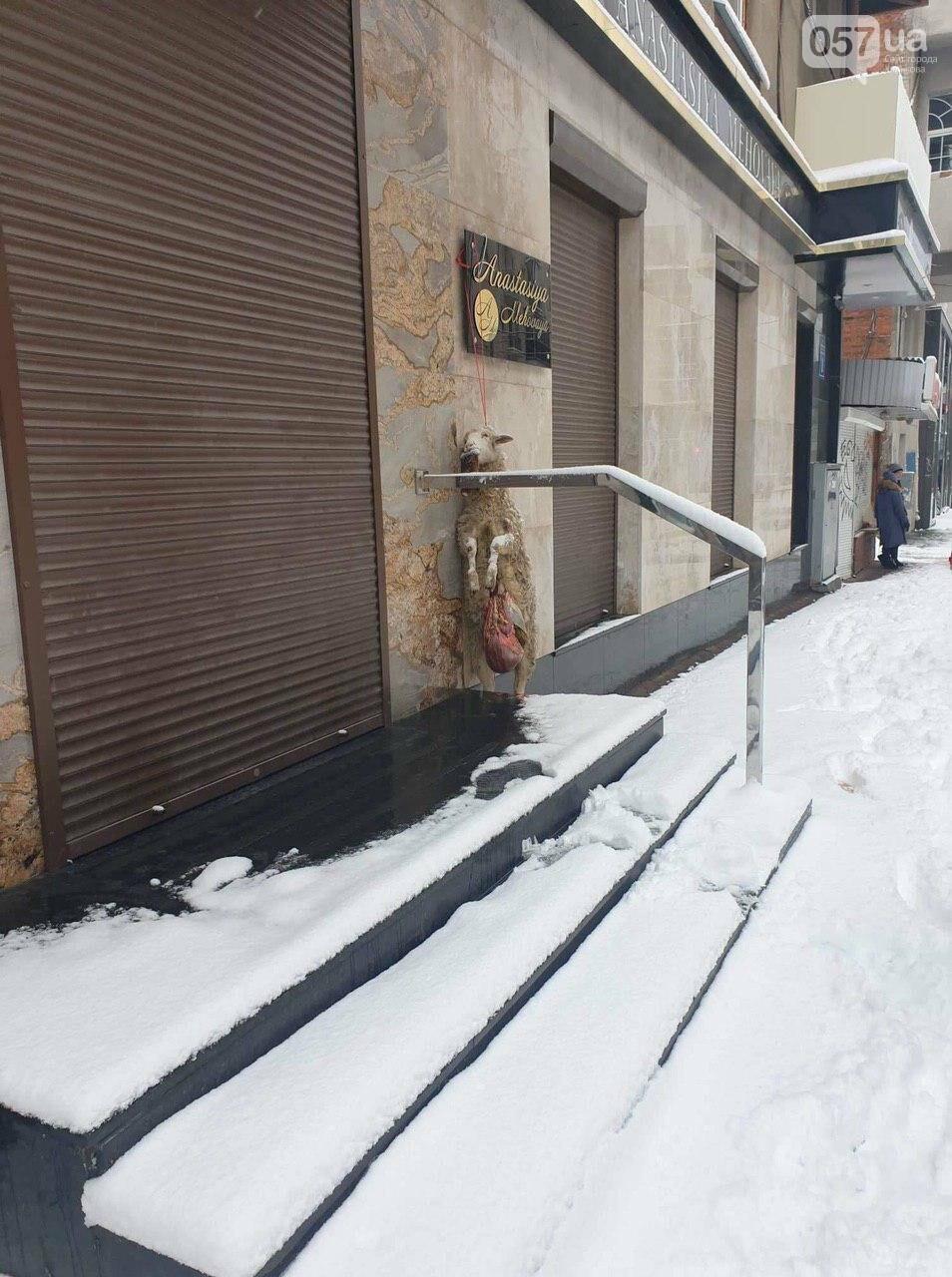 В центре Харькова у дверей бутика повесили выпотрошенный труп овцы, - ФОТО, фото-1