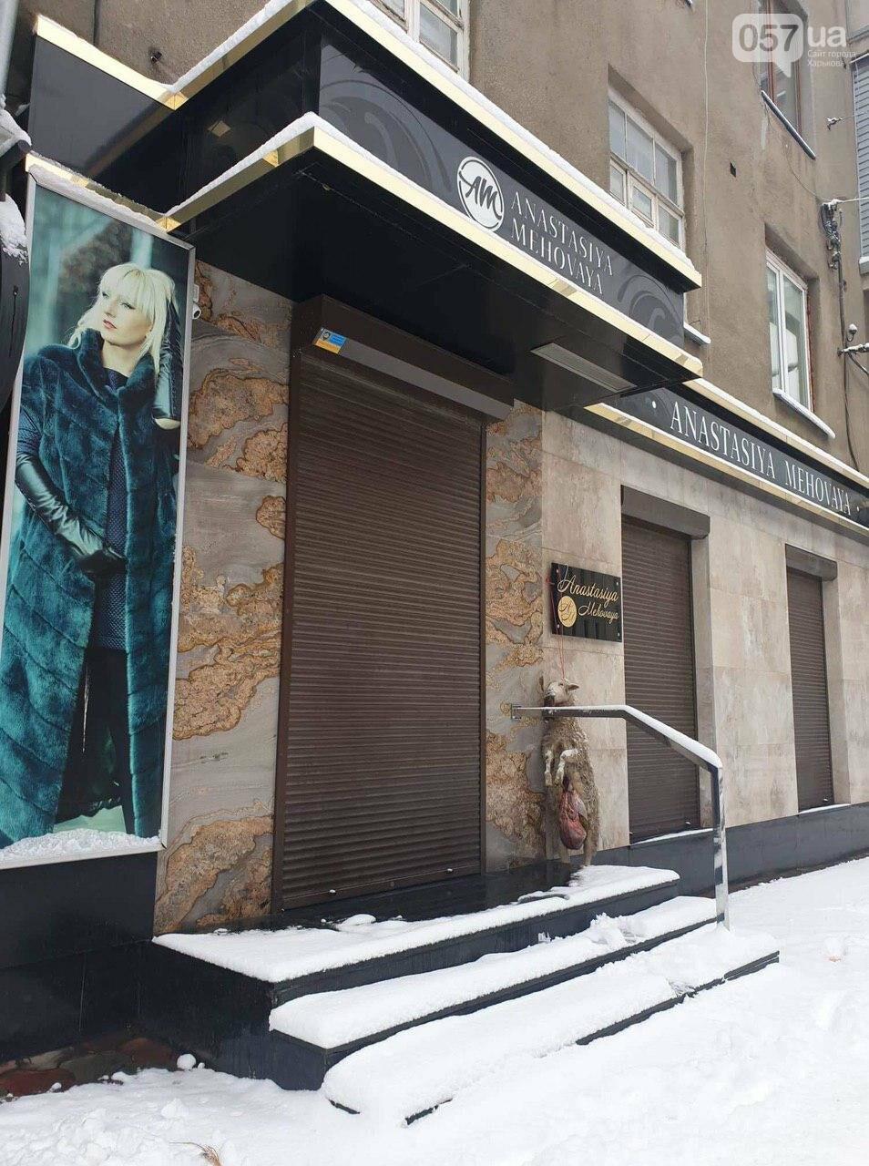 В центре Харькова у дверей бутика повесили выпотрошенный труп овцы, - ФОТО, фото-2