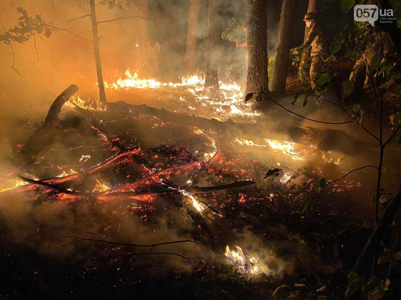 """""""Горит лес, нужна помощь"""": как мы тушили пожар в Чугуеве, - ФОТО, фото-10"""