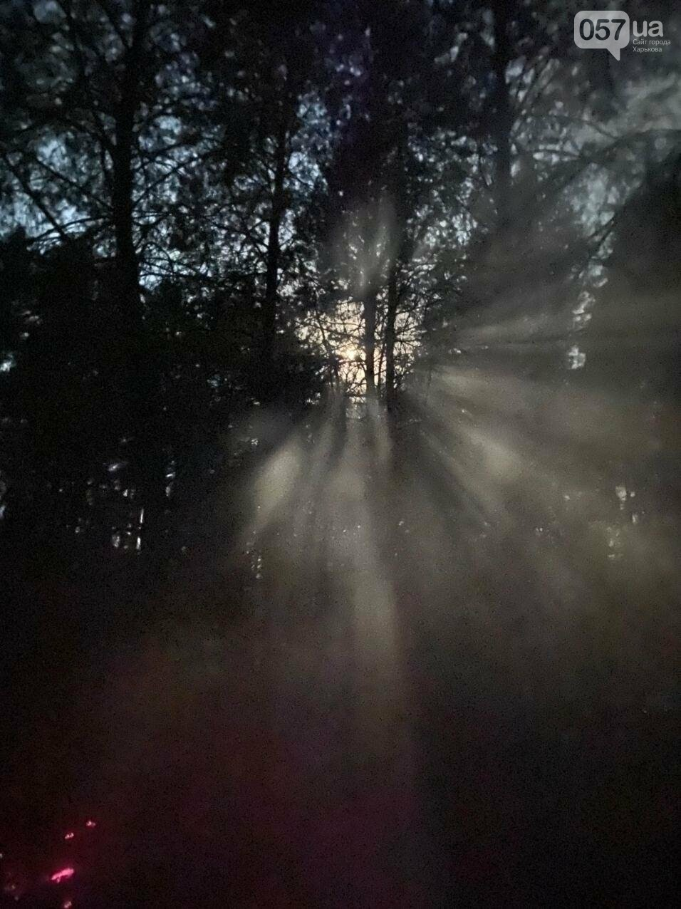 """""""Горит лес, нужна помощь"""": как мы тушили пожар в Чугуеве, - ФОТО, фото-12"""