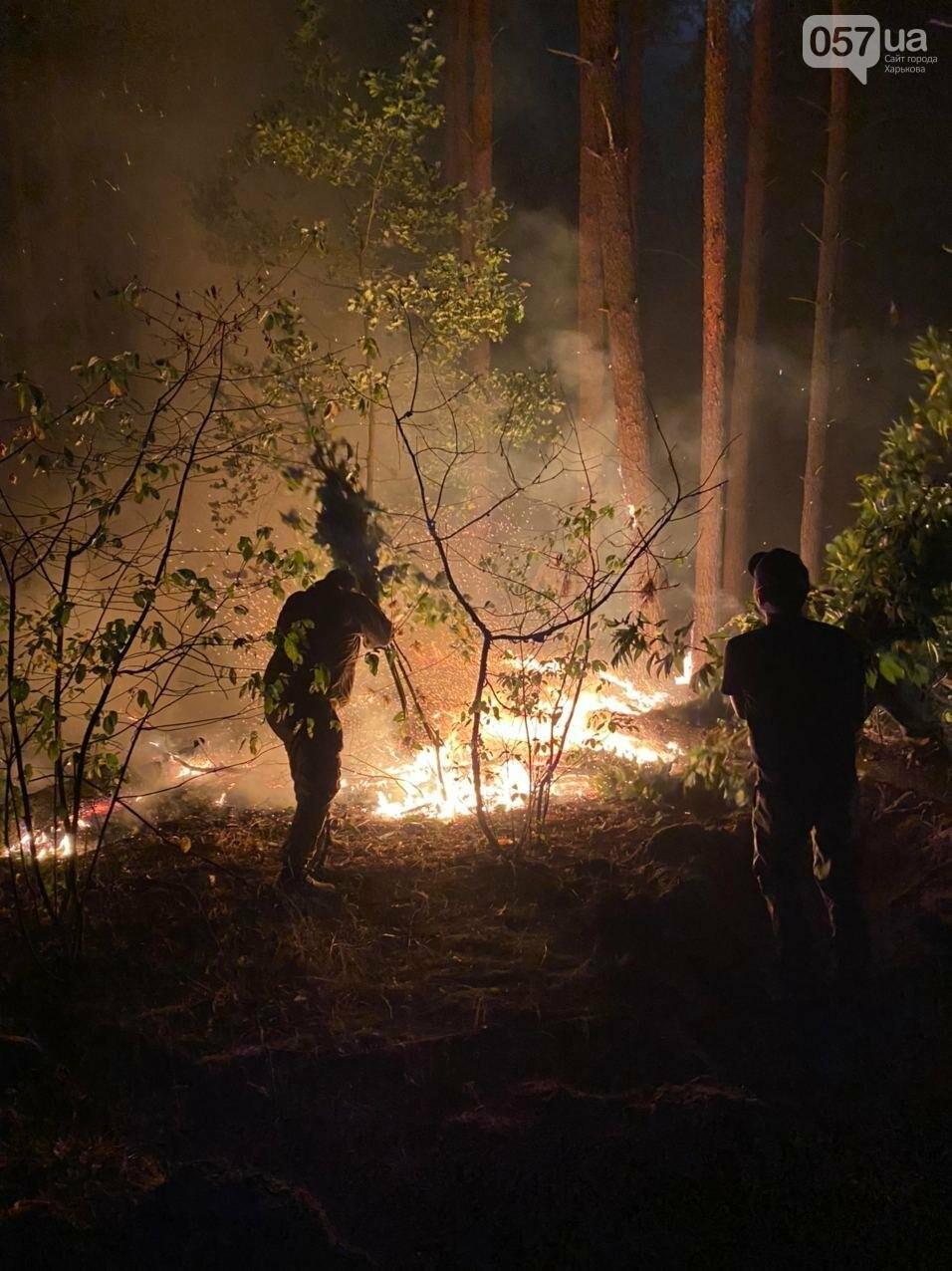 """""""Горит лес, нужна помощь"""": как мы тушили пожар в Чугуеве, - ФОТО, фото-3"""