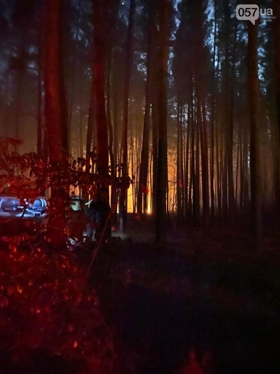 """""""Горит лес, нужна помощь"""": как мы тушили пожар в Чугуеве, - ФОТО, фото-2"""