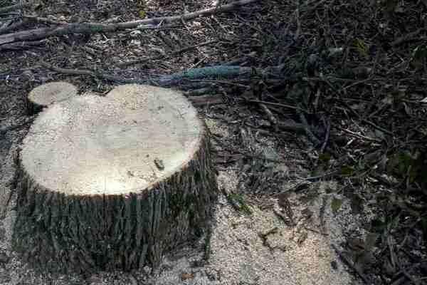 В Харьковской области мужчины незаконно вырубили лес на 200 тысяч гривен (ФОТО), фото-3