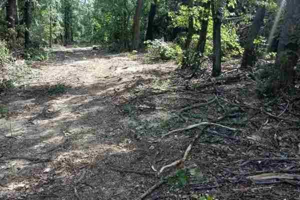 В Харьковской области мужчины незаконно вырубили лес на 200 тысяч гривен (ФОТО), фото-2