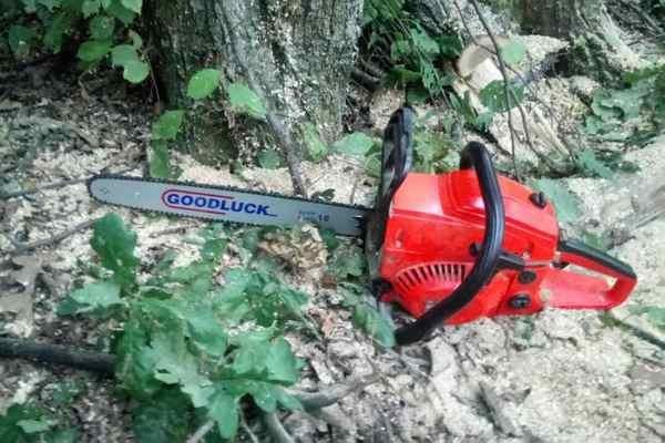 В Харьковской области мужчины незаконно вырубили лес на 200 тысяч гривен (ФОТО), фото-4