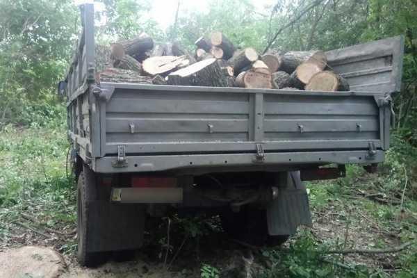 В Харьковской области мужчины незаконно вырубили лес на 200 тысяч гривен (ФОТО), фото-5