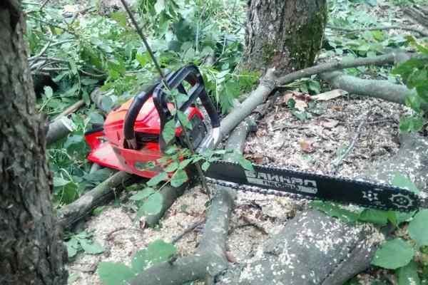 В Харьковской области мужчины незаконно вырубили лес на 200 тысяч гривен (ФОТО), фото-6