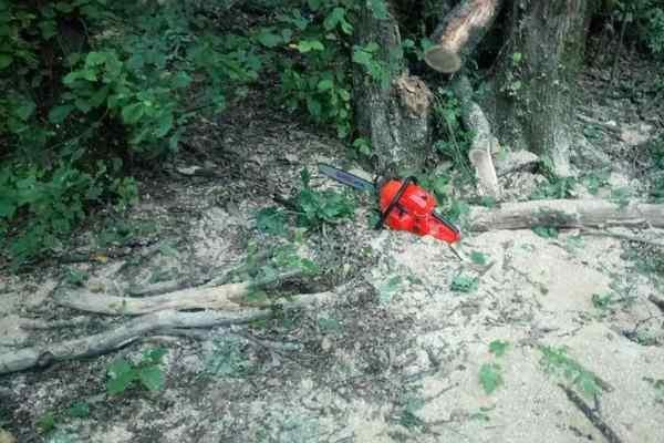 В Харьковской области мужчины незаконно вырубили лес на 200 тысяч гривен (ФОТО), фото-7