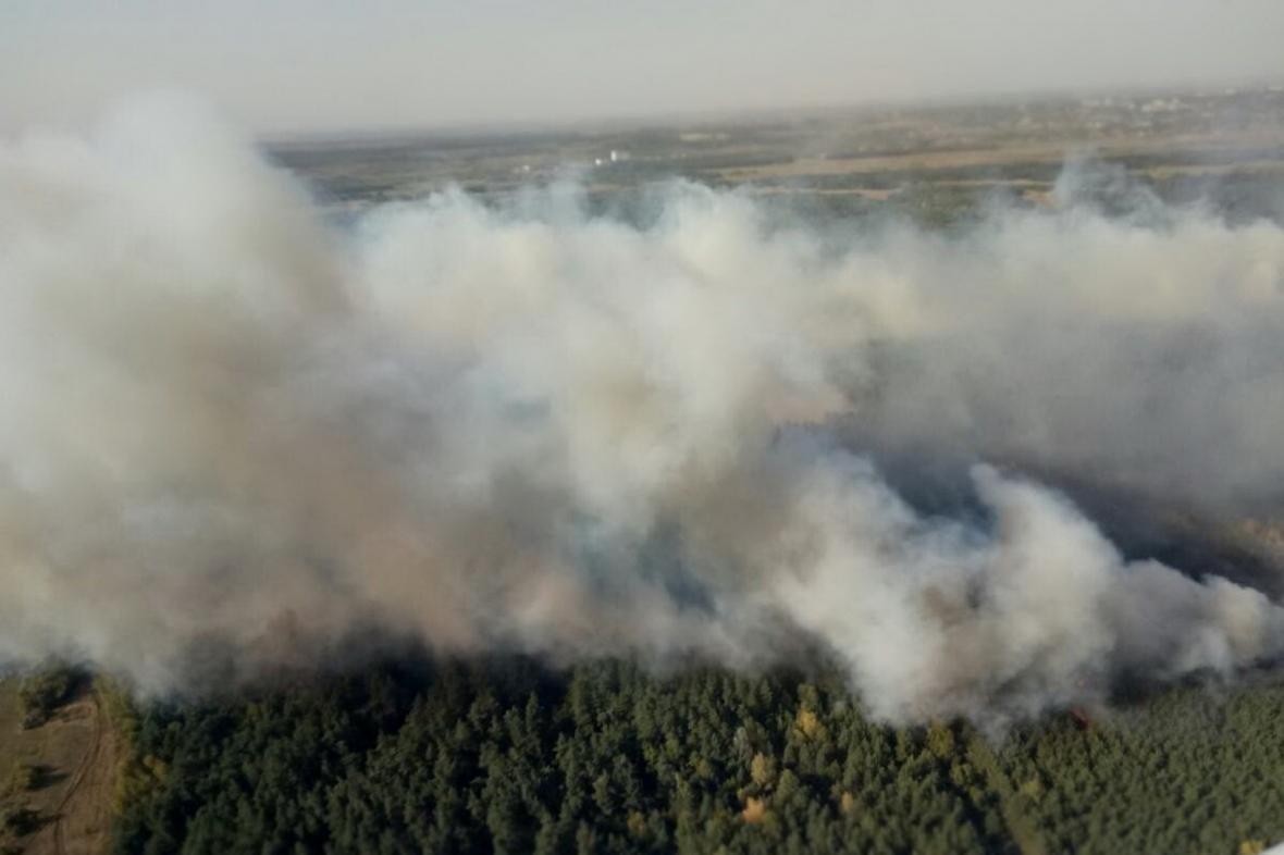 На Харьковщине спасатели тушат крупный лесной пожар (ФОТО), фото-1