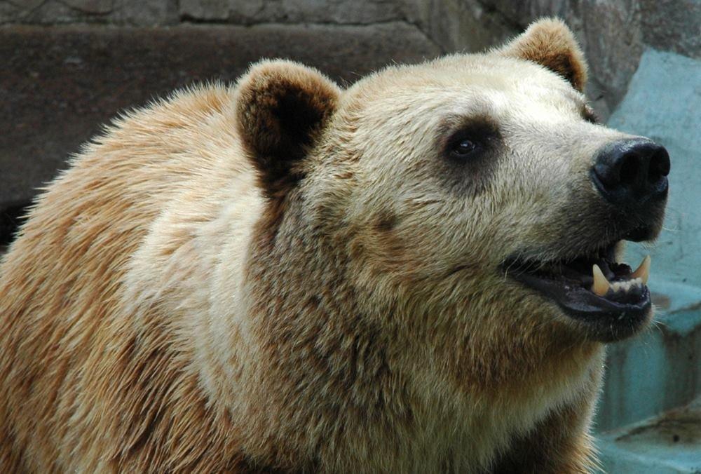 В Харьковском зоопарке из-за аномального тепла не могли уснуть медведи (ФОТО) , фото-1
