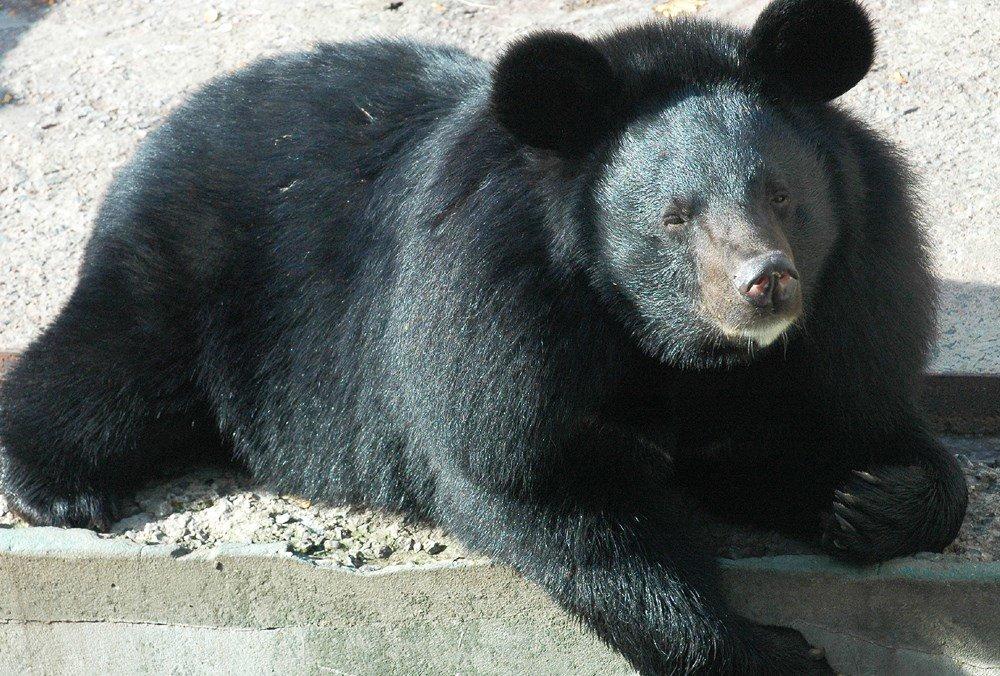В Харьковском зоопарке из-за аномального тепла не могли уснуть медведи (ФОТО) , фото-2